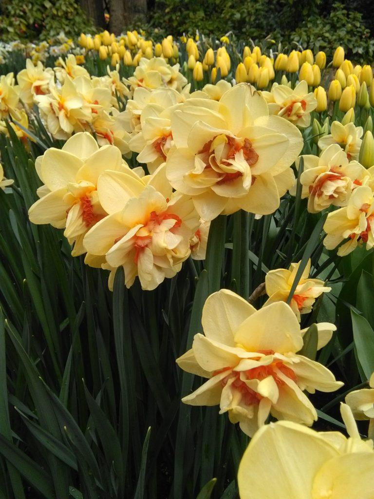 A csodálatos sárga színek a napot, a gazdagságot jelképezik a keleti szimbolum rendszerben